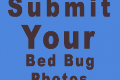 submit-bed-bug-photo-form