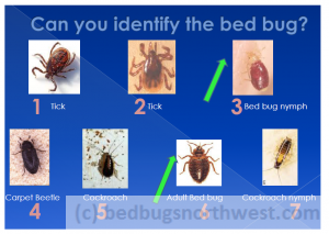 bed bug or cockroach
