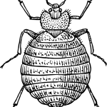bed bug line drawing